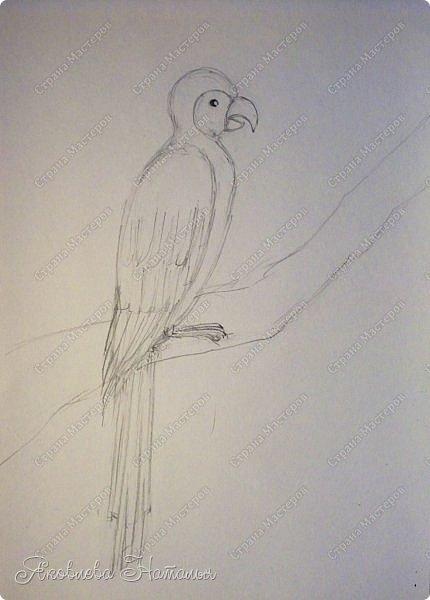 """Всем, здравствуйте!  Продолжаю рубрику """"Рисуем с детьми"""". На этот раз мы рисовали попугая на формате А-3, акварелью и восковыми мелками. Эскиз рисовали простым карандашом.  Ниже работы детей и несколько этапов фото 8"""