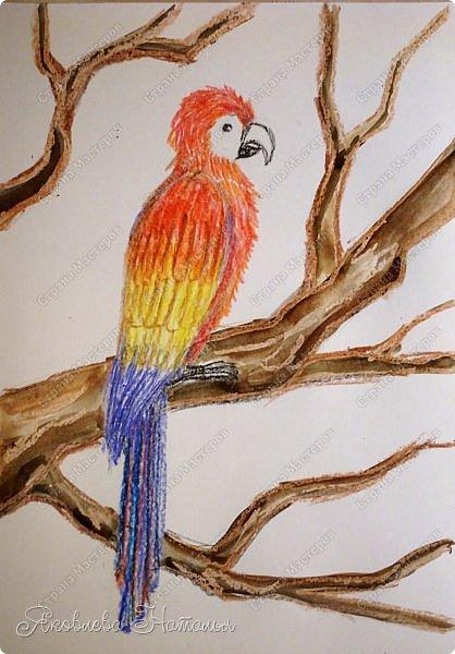 """Всем, здравствуйте!  Продолжаю рубрику """"Рисуем с детьми"""". На этот раз мы рисовали попугая на формате А-3, акварелью и восковыми мелками. Эскиз рисовали простым карандашом.  Ниже работы детей и несколько этапов фото 11"""