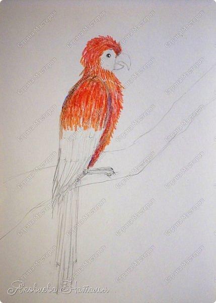 """Всем, здравствуйте!  Продолжаю рубрику """"Рисуем с детьми"""". На этот раз мы рисовали попугая на формате А-3, акварелью и восковыми мелками. Эскиз рисовали простым карандашом.  Ниже работы детей и несколько этапов фото 9"""