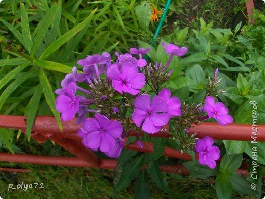 Здравствуйте!!!  Каждое время года хорошо по-своему.. Лето радует нас пестротой, разнообразием красок.. Вот я и любуюсь,любуюсь и любуюсь!..))) Хочу и с вами поделиться частичкой красоты,которую нам дарит природа!  Спасибо ей! фото 14