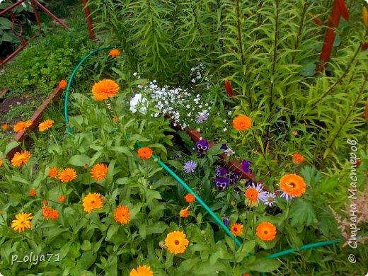 Здравствуйте!!!  Каждое время года хорошо по-своему.. Лето радует нас пестротой, разнообразием красок.. Вот я и любуюсь,любуюсь и любуюсь!..))) Хочу и с вами поделиться частичкой красоты,которую нам дарит природа!  Спасибо ей! фото 5