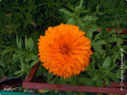 Здравствуйте!!!  Каждое время года хорошо по-своему.. Лето радует нас пестротой, разнообразием красок.. Вот я и любуюсь,любуюсь и любуюсь!..))) Хочу и с вами поделиться частичкой красоты,которую нам дарит природа!  Спасибо ей! фото 6