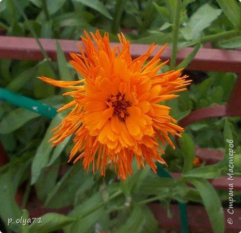 Здравствуйте!!!  Каждое время года хорошо по-своему.. Лето радует нас пестротой, разнообразием красок.. Вот я и любуюсь,любуюсь и любуюсь!..))) Хочу и с вами поделиться частичкой красоты,которую нам дарит природа!  Спасибо ей! фото 8