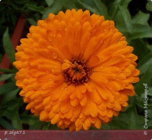 Здравствуйте!!!  Каждое время года хорошо по-своему.. Лето радует нас пестротой, разнообразием красок.. Вот я и любуюсь,любуюсь и любуюсь!..))) Хочу и с вами поделиться частичкой красоты,которую нам дарит природа!  Спасибо ей! фото 7