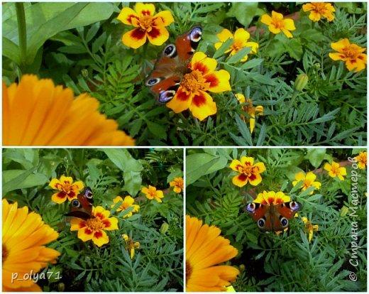 Здравствуйте!!!  Каждое время года хорошо по-своему.. Лето радует нас пестротой, разнообразием красок.. Вот я и любуюсь,любуюсь и любуюсь!..))) Хочу и с вами поделиться частичкой красоты,которую нам дарит природа!  Спасибо ей! фото 10