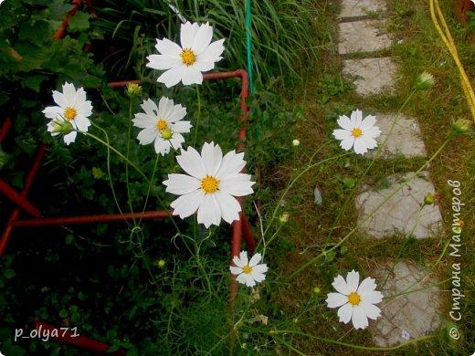 Здравствуйте!!!  Каждое время года хорошо по-своему.. Лето радует нас пестротой, разнообразием красок.. Вот я и любуюсь,любуюсь и любуюсь!..))) Хочу и с вами поделиться частичкой красоты,которую нам дарит природа!  Спасибо ей! фото 35