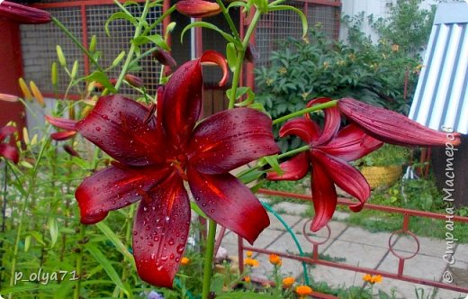 Здравствуйте!!!  Каждое время года хорошо по-своему.. Лето радует нас пестротой, разнообразием красок.. Вот я и любуюсь,любуюсь и любуюсь!..))) Хочу и с вами поделиться частичкой красоты,которую нам дарит природа!  Спасибо ей! фото 33