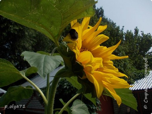 Здравствуйте!!!  Каждое время года хорошо по-своему.. Лето радует нас пестротой, разнообразием красок.. Вот я и любуюсь,любуюсь и любуюсь!..))) Хочу и с вами поделиться частичкой красоты,которую нам дарит природа!  Спасибо ей! фото 28
