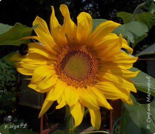 Здравствуйте!!!  Каждое время года хорошо по-своему.. Лето радует нас пестротой, разнообразием красок.. Вот я и любуюсь,любуюсь и любуюсь!..))) Хочу и с вами поделиться частичкой красоты,которую нам дарит природа!  Спасибо ей! фото 27