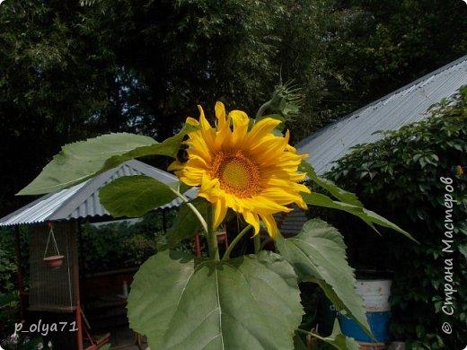 Здравствуйте!!!  Каждое время года хорошо по-своему.. Лето радует нас пестротой, разнообразием красок.. Вот я и любуюсь,любуюсь и любуюсь!..))) Хочу и с вами поделиться частичкой красоты,которую нам дарит природа!  Спасибо ей! фото 26