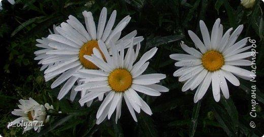 Здравствуйте!!!  Каждое время года хорошо по-своему.. Лето радует нас пестротой, разнообразием красок.. Вот я и любуюсь,любуюсь и любуюсь!..))) Хочу и с вами поделиться частичкой красоты,которую нам дарит природа!  Спасибо ей! фото 21