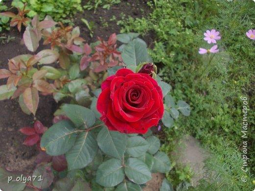 Здравствуйте!!!  Каждое время года хорошо по-своему.. Лето радует нас пестротой, разнообразием красок.. Вот я и любуюсь,любуюсь и любуюсь!..))) Хочу и с вами поделиться частичкой красоты,которую нам дарит природа!  Спасибо ей! фото 25