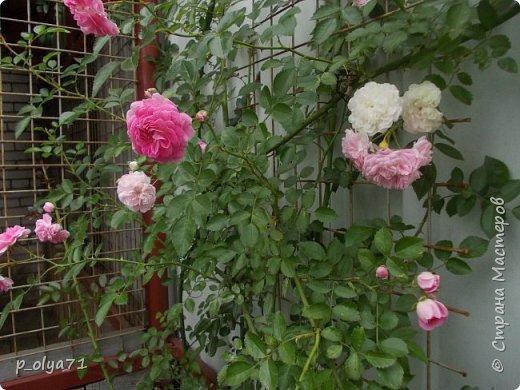 Здравствуйте!!!  Каждое время года хорошо по-своему.. Лето радует нас пестротой, разнообразием красок.. Вот я и любуюсь,любуюсь и любуюсь!..))) Хочу и с вами поделиться частичкой красоты,которую нам дарит природа!  Спасибо ей! фото 24