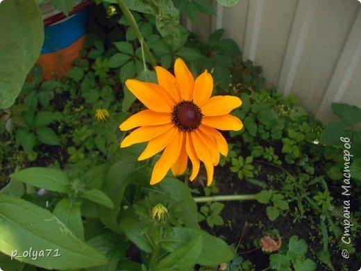 Здравствуйте!!!  Каждое время года хорошо по-своему.. Лето радует нас пестротой, разнообразием красок.. Вот я и любуюсь,любуюсь и любуюсь!..))) Хочу и с вами поделиться частичкой красоты,которую нам дарит природа!  Спасибо ей! фото 18