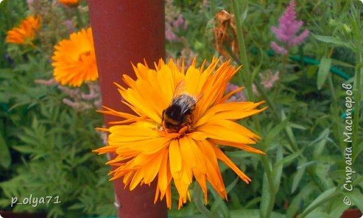 Здравствуйте!!!  Каждое время года хорошо по-своему.. Лето радует нас пестротой, разнообразием красок.. Вот я и любуюсь,любуюсь и любуюсь!..))) Хочу и с вами поделиться частичкой красоты,которую нам дарит природа!  Спасибо ей! фото 11