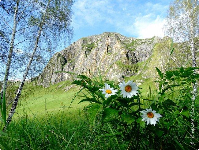 Это Иоанн Кронштадтский, святой праведник, сказал, что цветы – остатки рая на земле. И разве нельзя назвать райским местом этот родник в Бешпельтирском логу? У нас, в Горном Алтае, такая красота повсюду. И я приглашаю вас на неспешную прогулку по цветущему Алтаю. фото 98