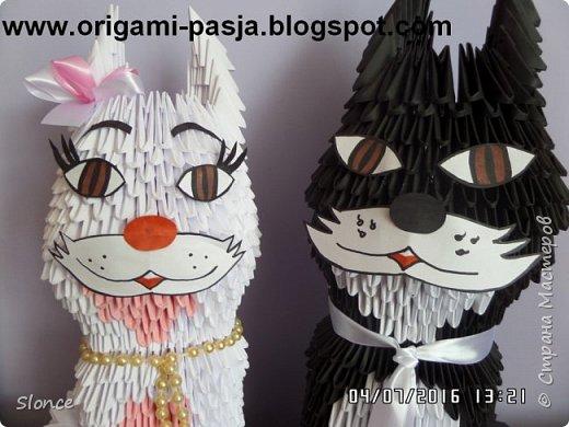 Para kotów. фото 2