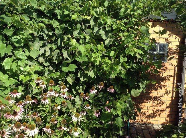Вид из окна столовой. фото 34