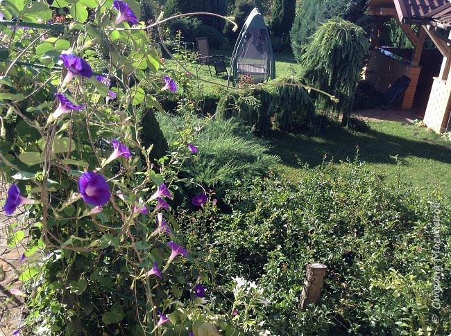 Вид из окна столовой. фото 1