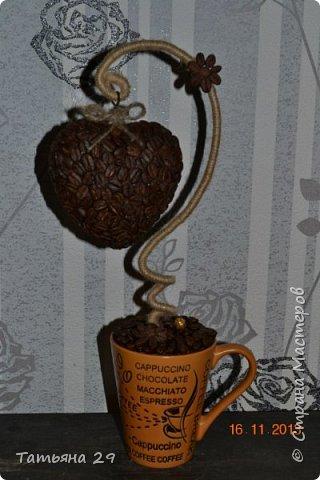 Моё первое кофейное деревце. фото 2