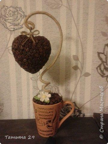 Моё первое кофейное деревце. фото 3
