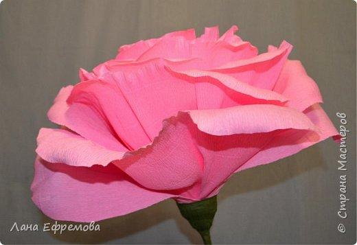 Большие цветы из бумаги фото 5