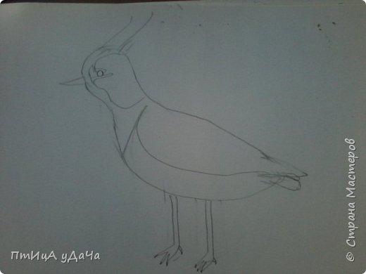 Вот такая птичка - луговка! фото 4