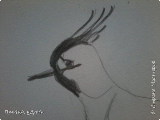 Вот такая птичка - луговка! фото 5