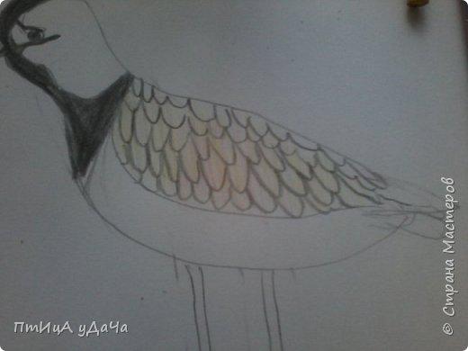 Вот такая птичка - луговка! фото 6