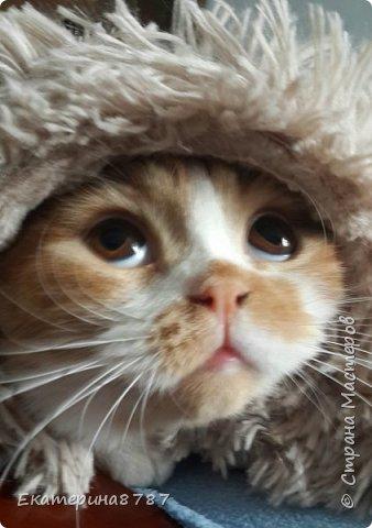 Знакомлю вас с добрейшим и очаровательным котом!  Зовут Марсель или Марсик )) фото 15