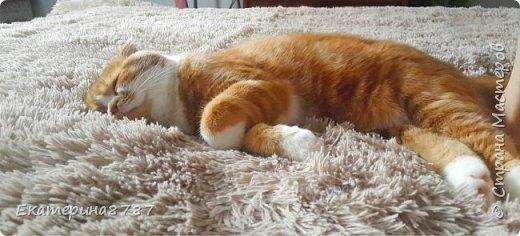 Знакомлю вас с добрейшим и очаровательным котом!  Зовут Марсель или Марсик )) фото 3