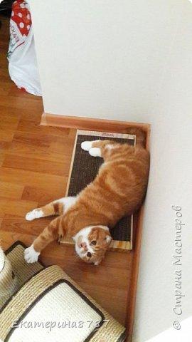 Знакомлю вас с добрейшим и очаровательным котом!  Зовут Марсель или Марсик )) фото 7