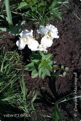 мой огородик  фото 2