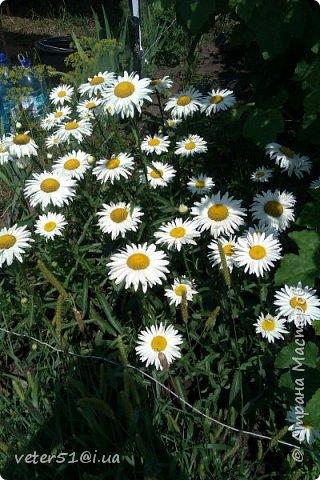 мой огородик  фото 1