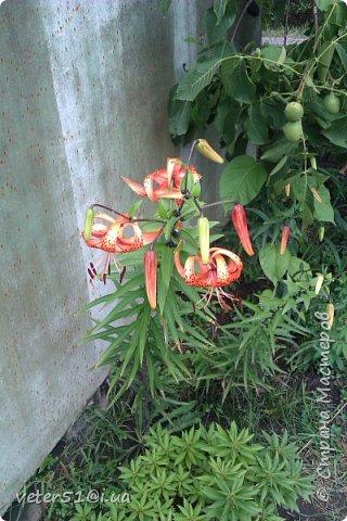 мой огородик  фото 4