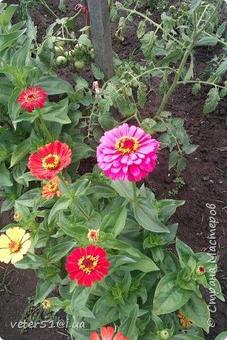 мой огородик  фото 3