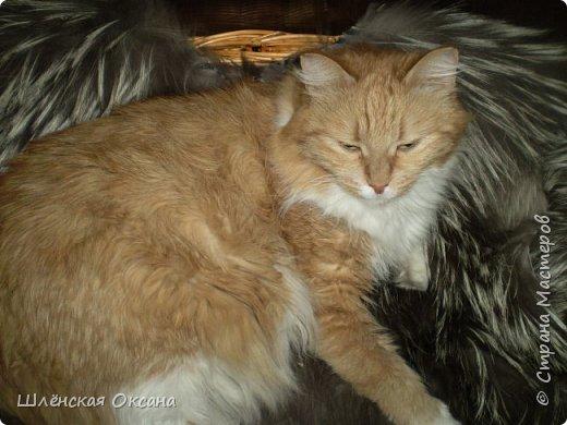16 лет тому назад появилась в нашем доме умница,раскрасавица Рогнеда Павловна. фото 2