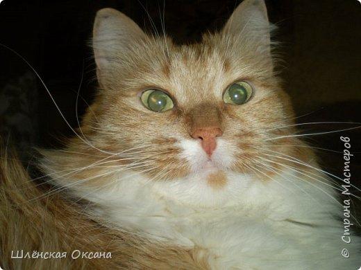 16 лет тому назад появилась в нашем доме умница,раскрасавица Рогнеда Павловна. фото 1