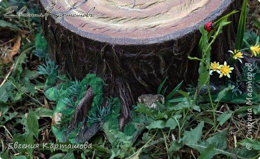 Здравствуйте, милые жители СМ! Сегодня я поделюсь с вами тем, как делала пенечек для моей Ягули http://stranamasterov.ru/node/1044029 Фото мало, постараюсь описать словами) Долго искала в интернете как сделать мох, так и не нашла ни одного МК. фото 7