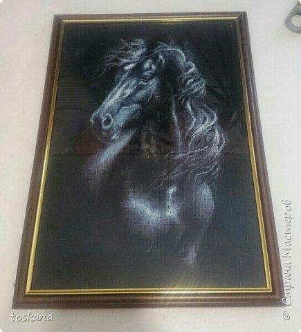 Очаровательный конь. красота и грация!!! фото 1