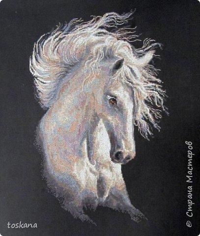 Очаровательный конь. красота и грация!!! фото 2