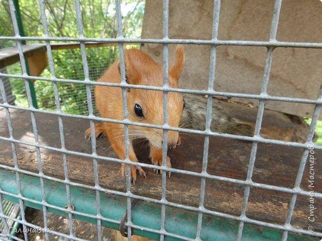 """25 июля был организован поход на зообазу. Перед въездом в село Черга есть указатель """"Зообаза"""", которая является и базой отдыха, и мини-зоопарком. Дорога оказалась длиннее, чем я предполагала. фото 11"""