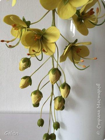 """Всем привет!       На эту работу меня вдохновило чудное дерево Кассия трубчатая.Зрелище, я вам скажу. потрясающее. В конце поста выложу фотку этой красоты. делала по живой веточке. сняла молд и вперёд!        Кассия получила свое название """"Золотой дождь"""" за ниспадающие каскады желтых цветов. Золотые кисти кассии, словно продолжение солнечных лучей, напоминают солнечный ливень. фото 4"""