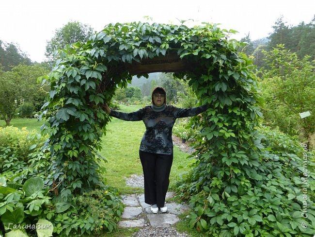 Вторым местом нашего временного жительства был Горно-Алтайский ботанический сад, расположенный по Чуйскому тракту в окрестности села Камлак и созданный в 1994 году. В него мы прибыли 26 июля. фото 17
