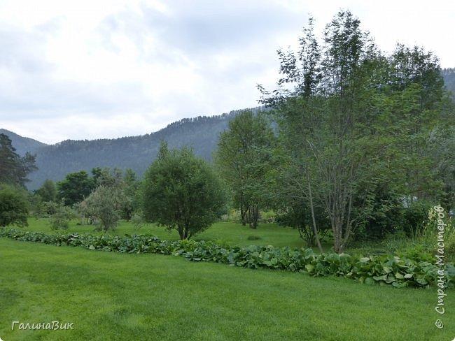 Вторым местом нашего временного жительства был Горно-Алтайский ботанический сад, расположенный по Чуйскому тракту в окрестности села Камлак и созданный в 1994 году. В него мы прибыли 26 июля. фото 19