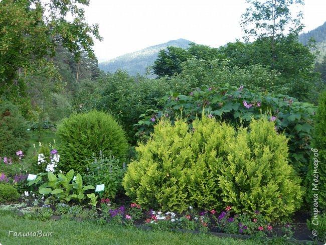 Вторым местом нашего временного жительства был Горно-Алтайский ботанический сад, расположенный по Чуйскому тракту в окрестности села Камлак и созданный в 1994 году. В него мы прибыли 26 июля. фото 56