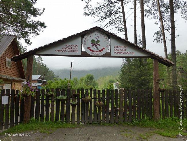 Вторым местом нашего временного жительства был Горно-Алтайский ботанический сад, расположенный по Чуйскому тракту в окрестности села Камлак и созданный в 1994 году. В него мы прибыли 26 июля. фото 1