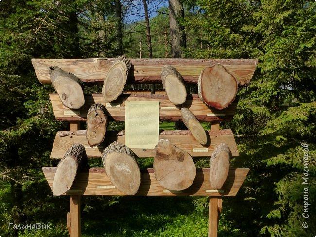 Вторым местом нашего временного жительства был Горно-Алтайский ботанический сад, расположенный по Чуйскому тракту в окрестности села Камлак и созданный в 1994 году. В него мы прибыли 26 июля. фото 60