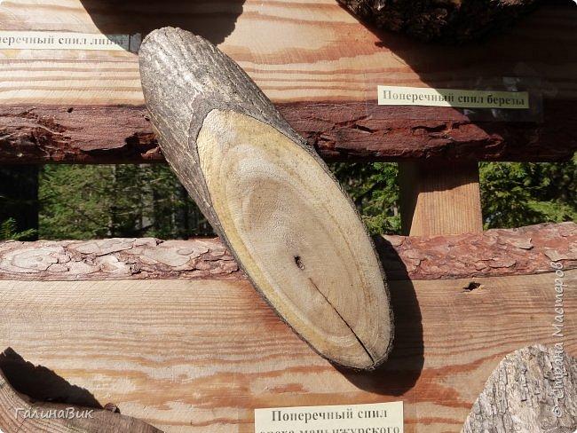 Вторым местом нашего временного жительства был Горно-Алтайский ботанический сад, расположенный по Чуйскому тракту в окрестности села Камлак и созданный в 1994 году. В него мы прибыли 26 июля. фото 68