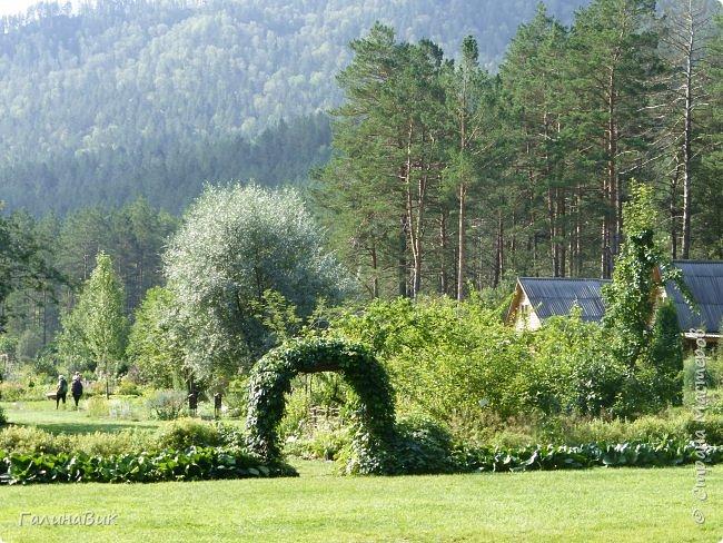 Вторым местом нашего временного жительства был Горно-Алтайский ботанический сад, расположенный по Чуйскому тракту в окрестности села Камлак и созданный в 1994 году. В него мы прибыли 26 июля. фото 20